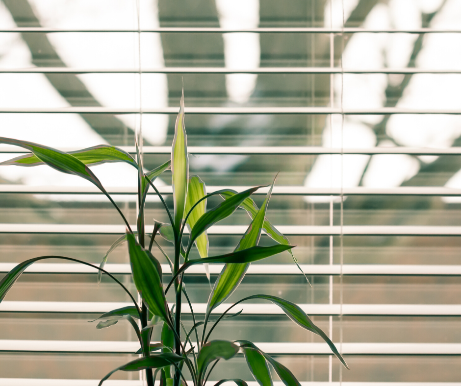plants that improve indoor air quality